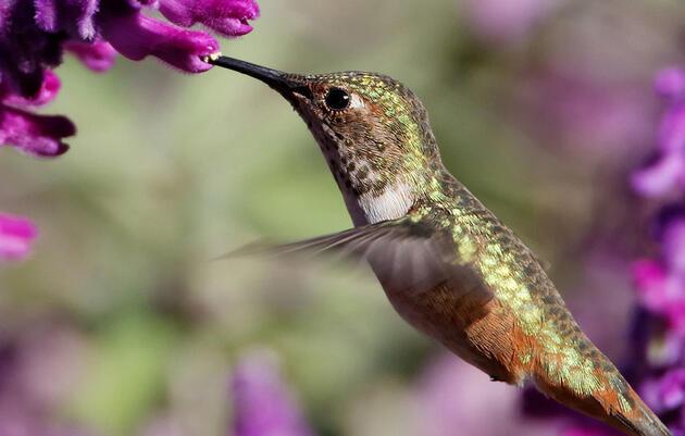 Audubon California reiterates support for Senate Bill 100