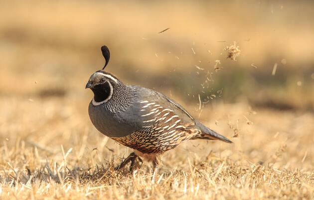 Virtual Audubon Advocacy Day 2021