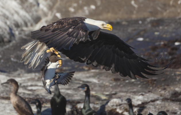 Congress Responds to Climate Change Impact on Seabirds and Fisheries