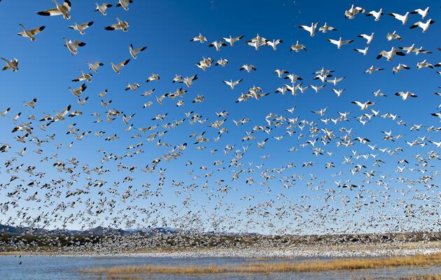 Saving Important Bird Areas (IBAs)