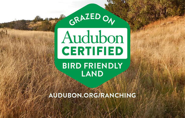 How conservation ranching is saving grassland birds