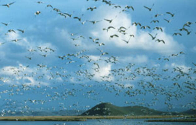 Klamath deal will bring down dams and help fish, but refuges and waterfowl remain high and dry