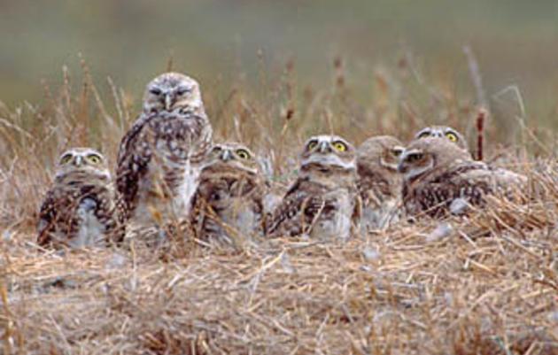 Audubon California Board of Directors