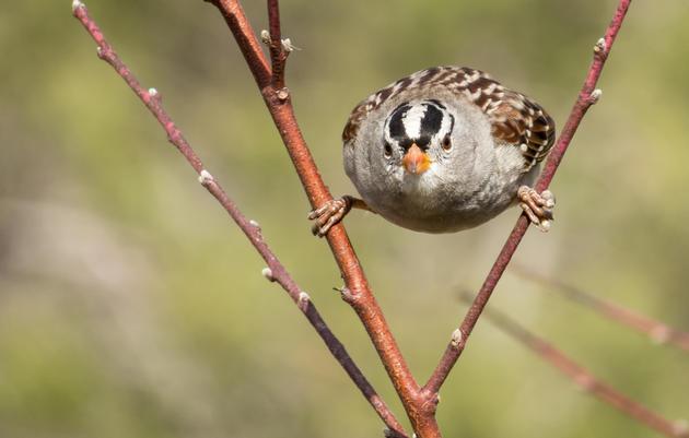 Birding vs. Bird Language