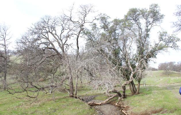 Birding Audubon's Bobcat Ranch