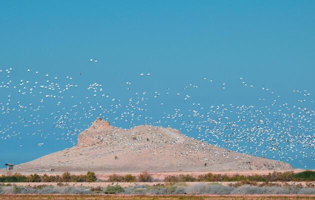 Bill Would Increase Federal Participation in Salton Sea Restoration Efforts