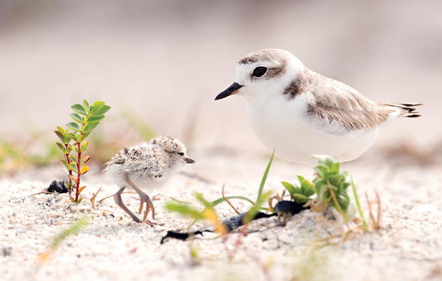 Share the Shore with Nesting Birds