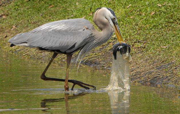 Audubon California endorses Proposition 67