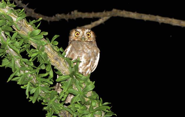 Creation of desert national monuments safeguards vital bird habitats