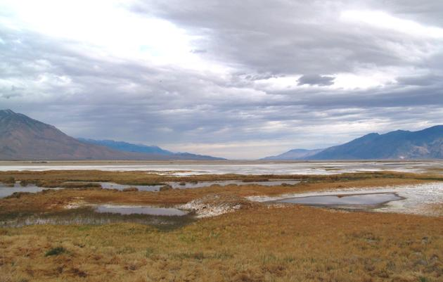 New opportunities for birds at Owens Lake