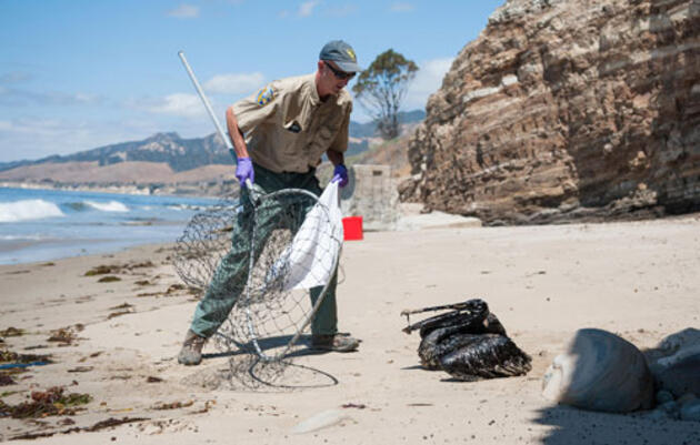 Ventura pipeline spills 700 barrels of oil