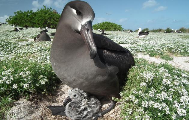 Thousands of Albatross Killed by Longline Fishing Gear