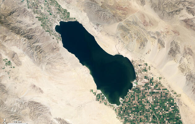 Roadmap for protecting bird habitat at the Salton Sea