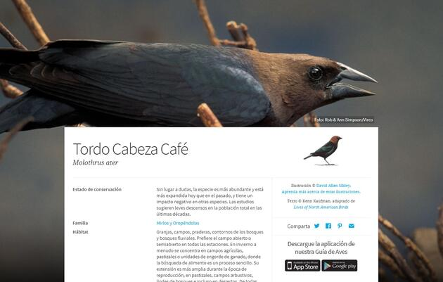 Ahora en Español Guía de Aves de América del Norte de Audubon / Audubon's Online Bird Guide now in Spanish