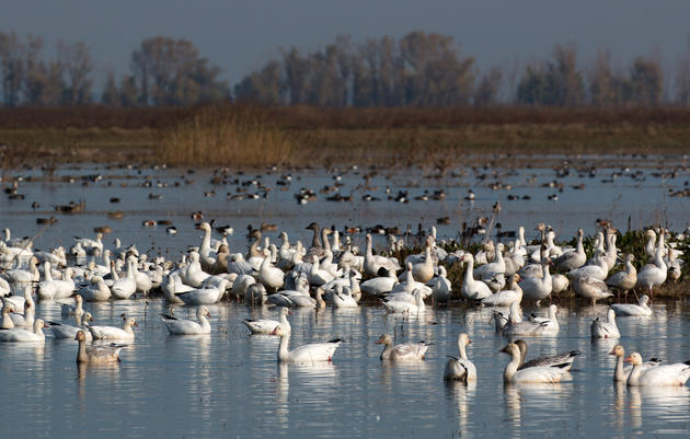 Bill defending California's migratory birds passes critical Assembly Floor vote