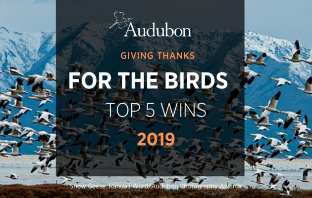 Top 5 Wins for Birds in 2019