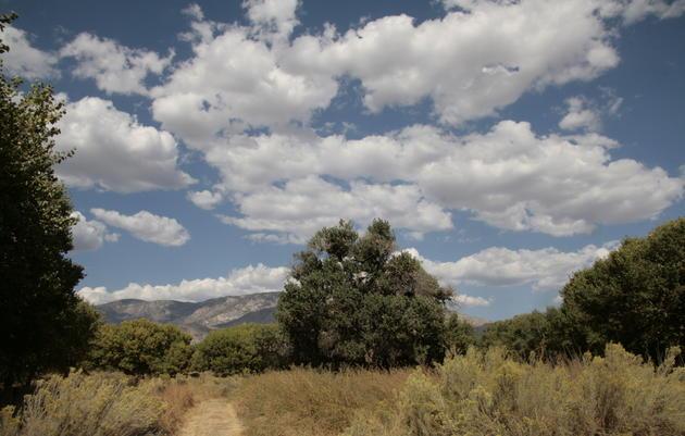 Audubon Kern River Preserve