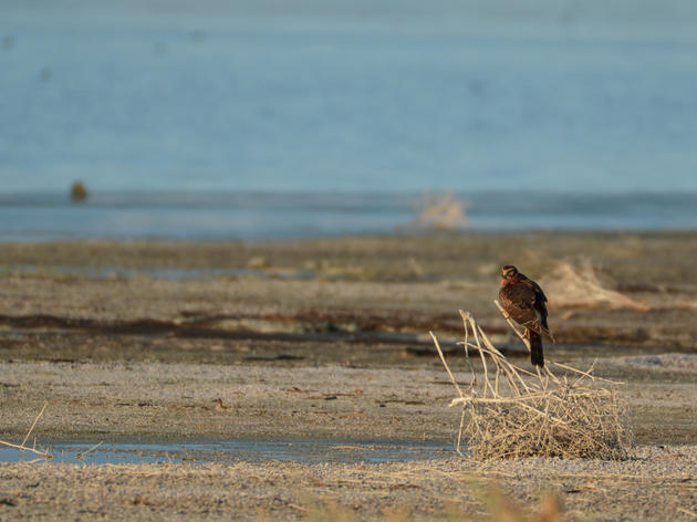 Gov. Newsom, 2020 must be a year of action at the Salton Sea