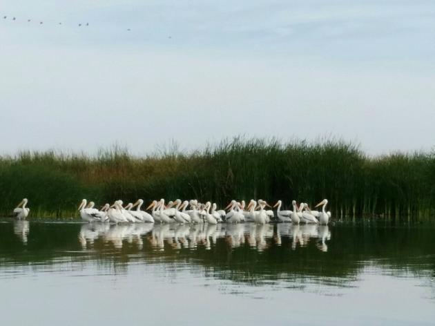 Exploring bird habitat in the Colorado River Delta