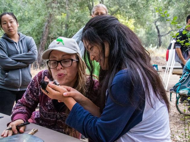 Audubon Starr Ranch wraps up its 19th bird banding season