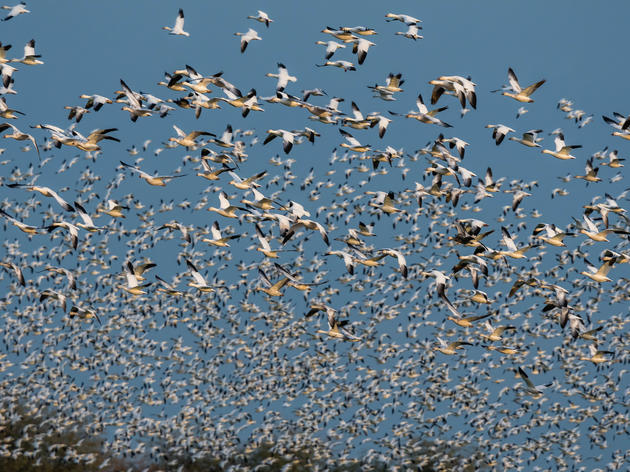 Speak Up for Birds at the Salton Sea