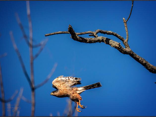 What is bird language?