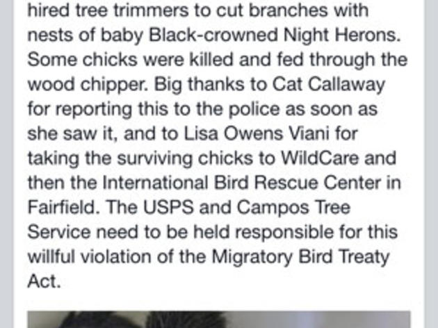 Killing of Bay Area chicks in nest highlights importance of not trimming trees in spring