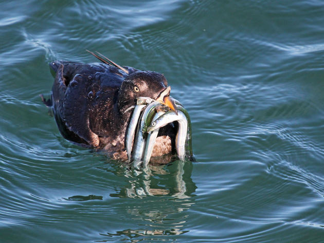 Protect our marine birds and mammals: stop HR 200