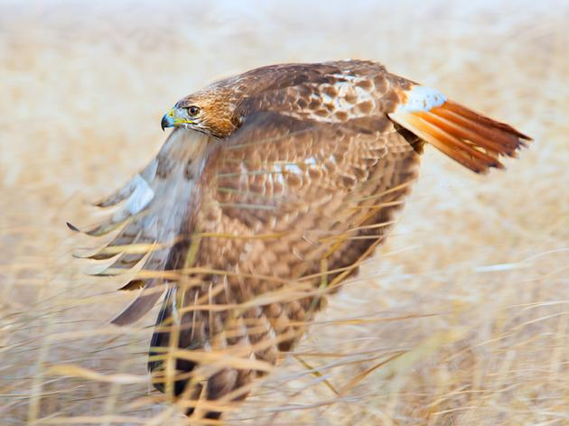 Great American Outdoors Act Will Benefit Birds, People, and Parks across California