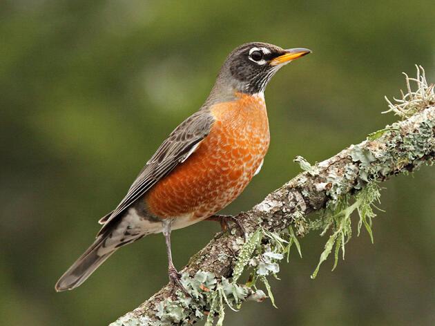 The Bird Lady