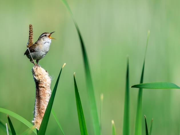 Bird Language in Practice