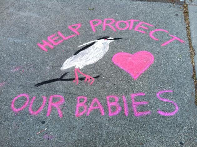 Art Flash Mob and other educational programs protect herons in downtown Oakland