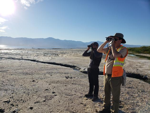 Surveying birds at the Salton Sea
