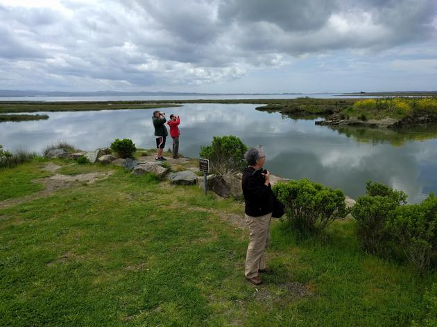 Surveying for shorebirds in Humboldt Bay