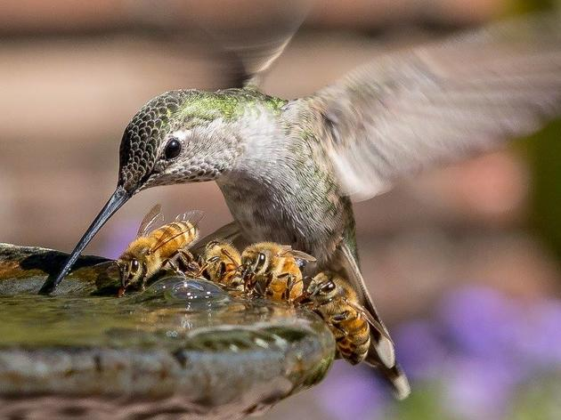 Do you know about the birds and the bees?