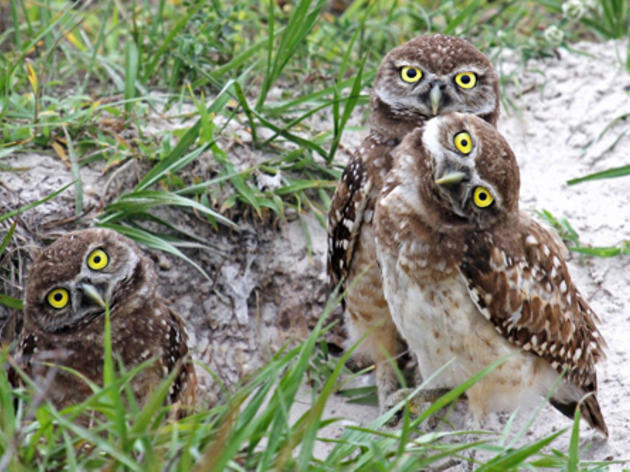 Major conservation bill is a huge boon to desert birds