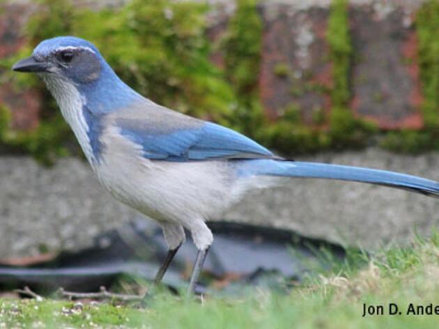How to Learn Bird Language