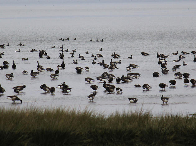 Conservation and hunting groups sue to halt Humboldt Bay habitat destruction
