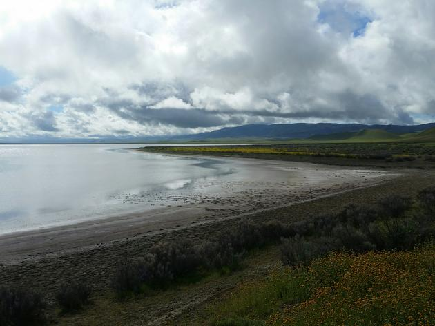 A lake reappears among the birds and wildflowers of the Carrizo Plain