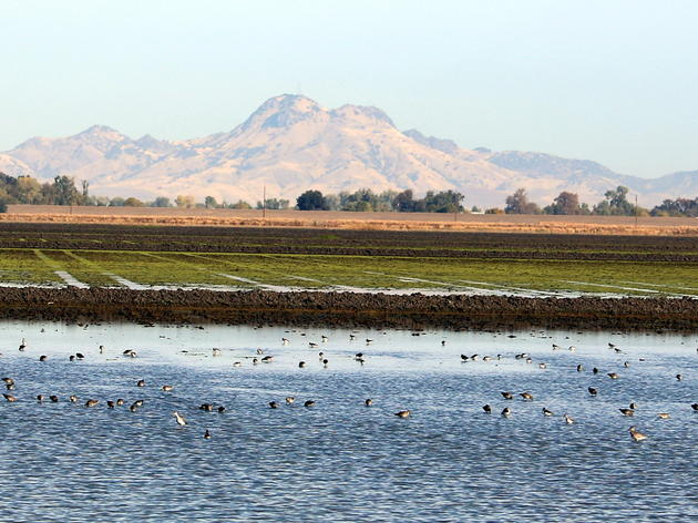 Revitalizing our floodplains