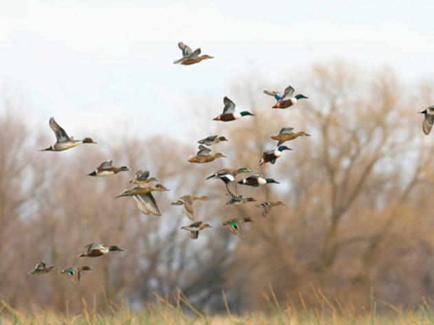 Proposed 'drought-response' language holds dangers for birds and wildlife