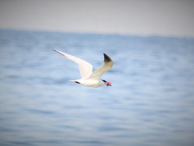 You May Have to Look Harder, but some Birds are Still at the Salton Sea