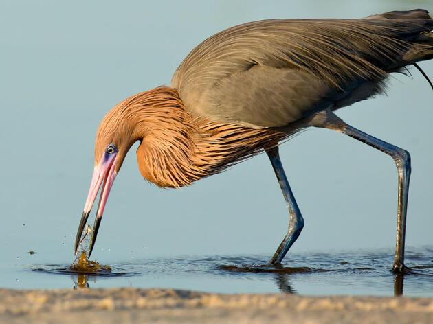 Otoño, 2020 en la laguna Salton Sea