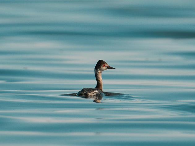 ¿Cual es el problema con la laguna Salton Sea?
