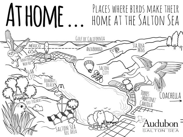 At Home... Birds of the Salton Sea Coloring Pages