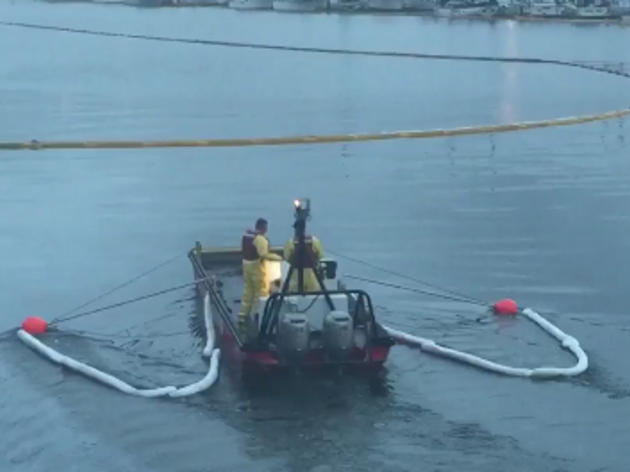 Oil spill at Port of Los Angeles, bird impact unknown