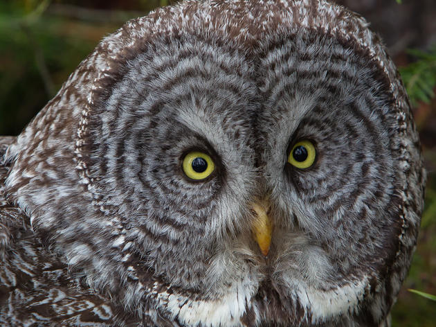Audubon California Calls on Congress to Pass New Bird Protection Bill