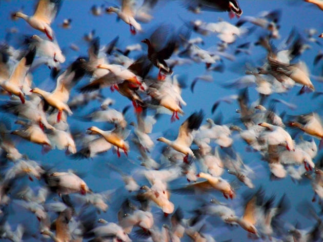 Administration Doubles Down on Bird-Killer Policy