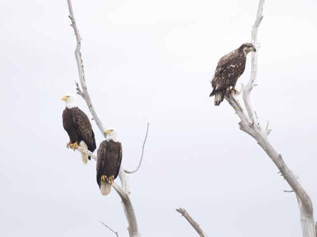 Audubon California: Newsom Expansion of Drought Declaration Means Badly-Needed Water for Migratory Birds