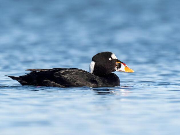 Audubon California: Richmond Spill More Than Enough to Damage Sensitive Ecosystem